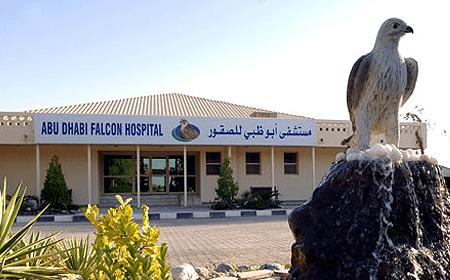 Abu Dhabi Falcon Hospital Abu Dhabi UAE