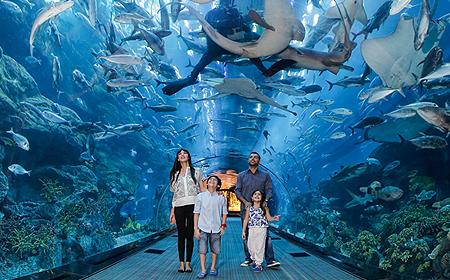 Dubai Aquarium Dubai UAE
