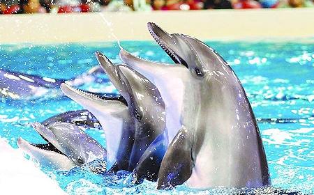 Dubai Dolphinarium Dubai UAE