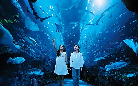 Dubai Aquarium &  Underwater Zoo - Fun things to do in Dubai