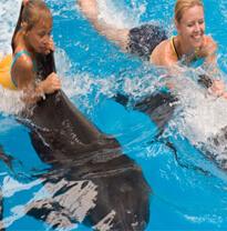 Dubai Dolphinarium - Fun things to do in Dubai