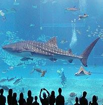 Fakieh Aquarium Jeddah Saudi Arabia