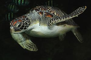 Oman Aquarium Muscat Oman