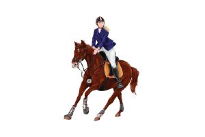 Emirates Equestrian Centre Dubai UAE