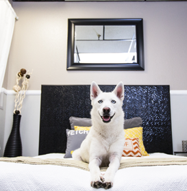 Pet Hotels Dubai